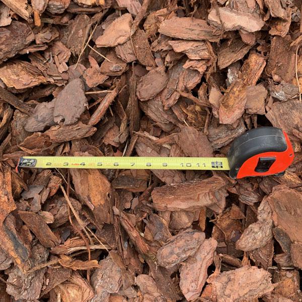 Small-pine-bark-2